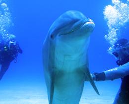 Bild Taucher mit Delfinen