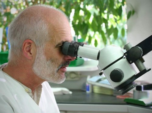 koch-dentallabor-stereomikroskop
